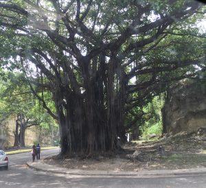delia-sebora_tree