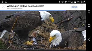 What Metaphor Do You See in This LIVE Eagles' Nest?